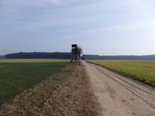 Hunting platforms that are literally everywhere in Germany