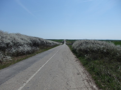 Between Vrsac and Bela Crkva