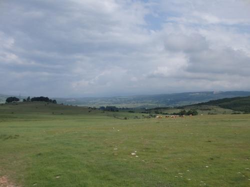 Endless fields