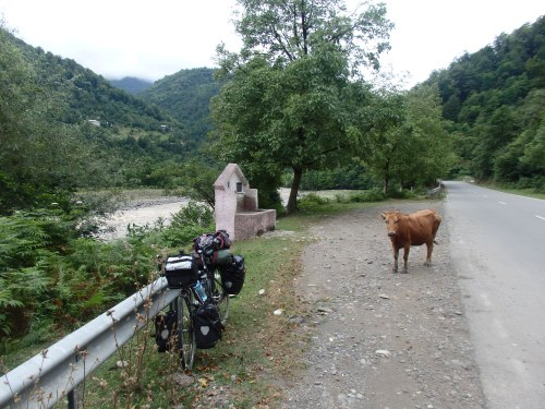My bike and a cow